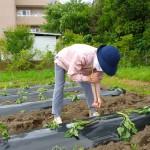 2016.5.19 芋植え (1)