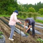 2016.5.19 芋植え (2)