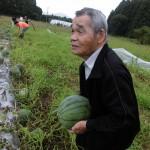 2018.7.10 スイカの収穫 (2)