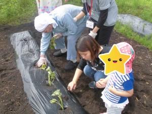 2019.5.14 野菜苗植え (19)