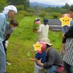 2019.5.14 野菜苗植え (7)