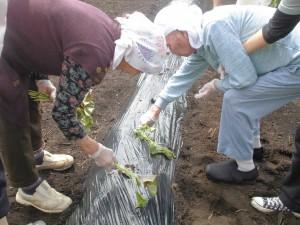 2019.5.14 野菜苗植え (14)